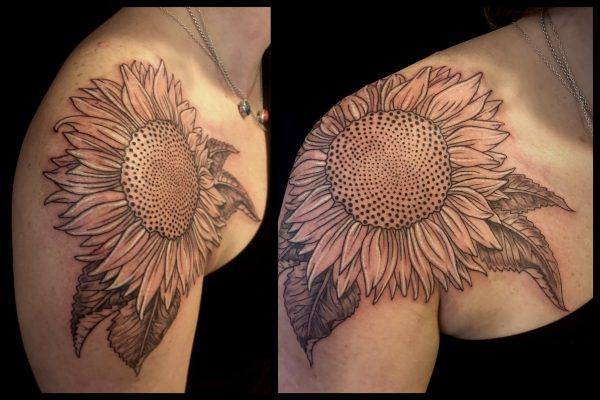 Cassidy Sunflower