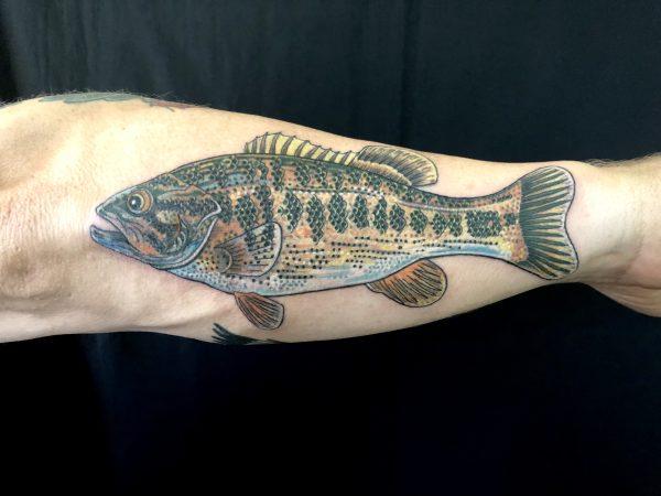 D Fish