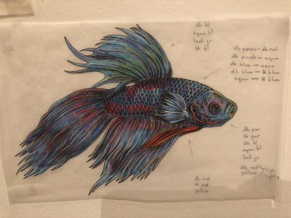 Drawing Beta Fish