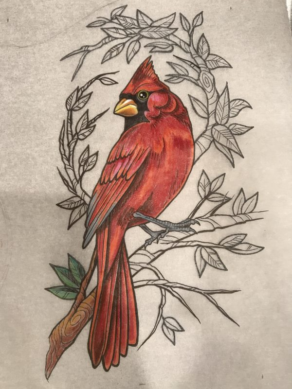 Drawing Cardinal